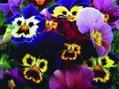 Лазаревское в цвету